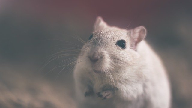 die mäuse