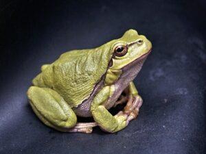 Krafttier Frosch